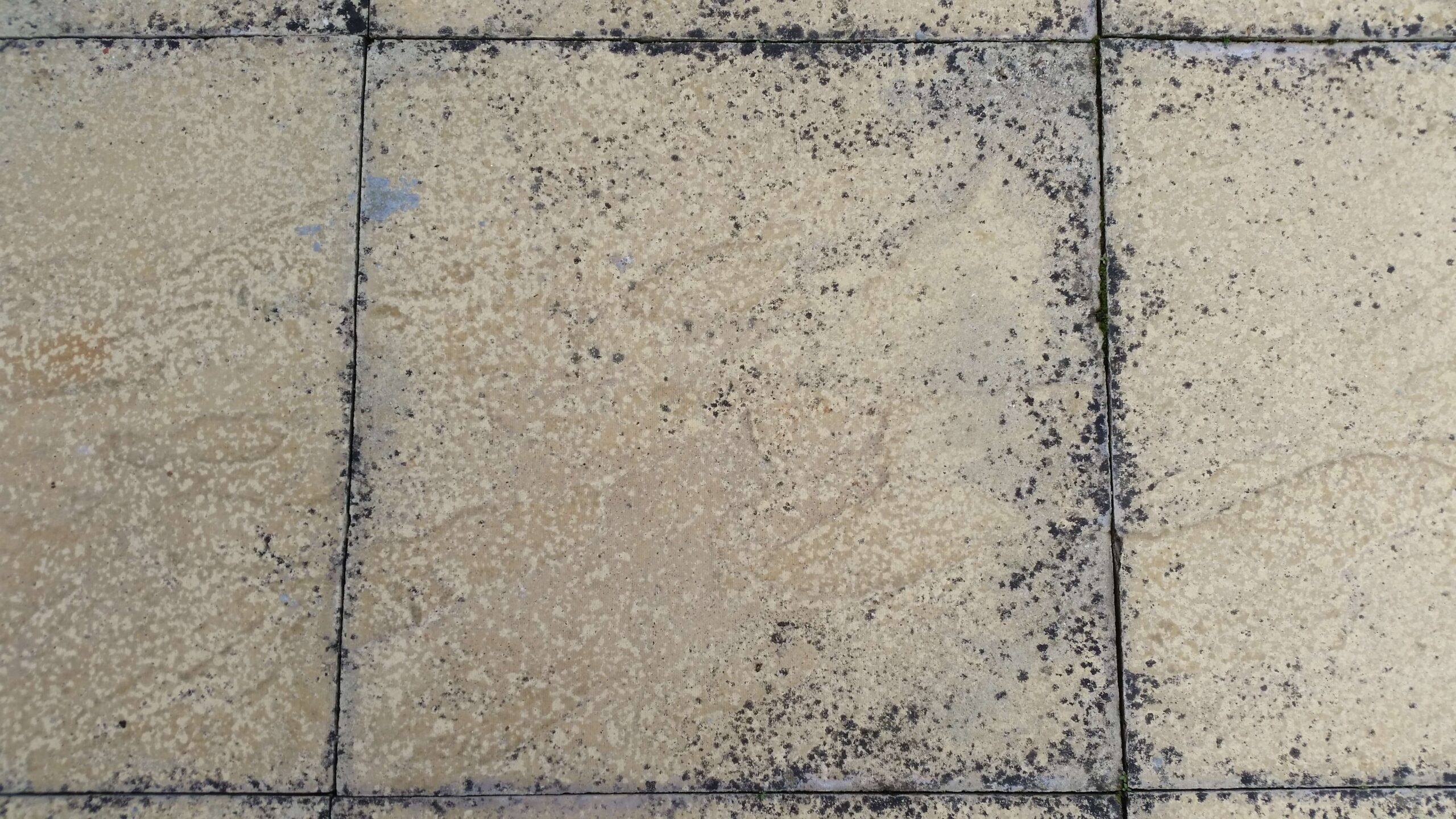 Lichen black splodges on driveway black marks on patios for Bleaching concrete driveway