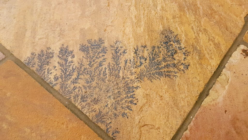 Natural Stone Fossil Fern Markings